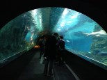 Sea tunnel.