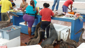 Fish Market on Santa Cruz - your Galapagos excursions