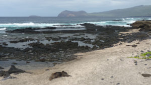 Galapagos Lava and Ocean with wildlife