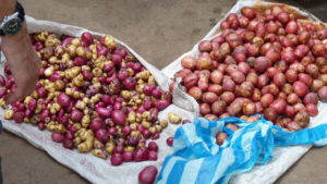 Atahualpa_potatoes- Cotacachi, Papallacta, Atahualpa