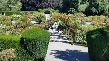 Botanical Gardens in Christchurch, Rose Garden