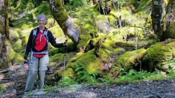Moss covered forest floor at Haast Pass