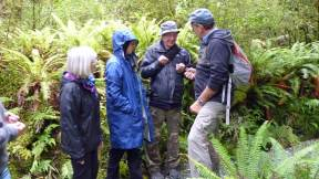 Fiordland Tours guide explaining the uses of some of the native plants in the Fiordland National Park, near Milford Sound