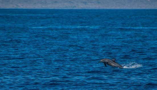 Exmouth Ningaloo dolphin photo credits kissthedolphin