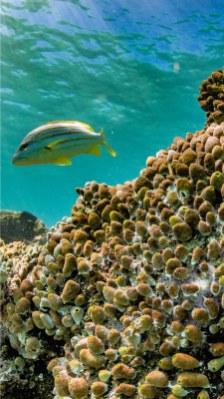 Exmouth Ningaloo Reef coral reef and fish photo credits kissthedolphin