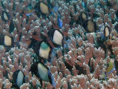 Muiron Ningaloo Reef coral and fish