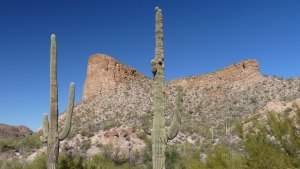 Saguaro and mountain, Apache Trail, Tortilla Flat, AZ