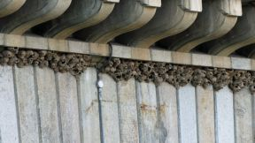 Swallow's nests on London Bridge at Lake Havasu City