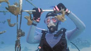 Coral Restoration in Curacao
