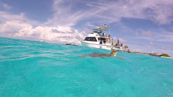 Turtles at Klein Curacao, a top Curacao dive site