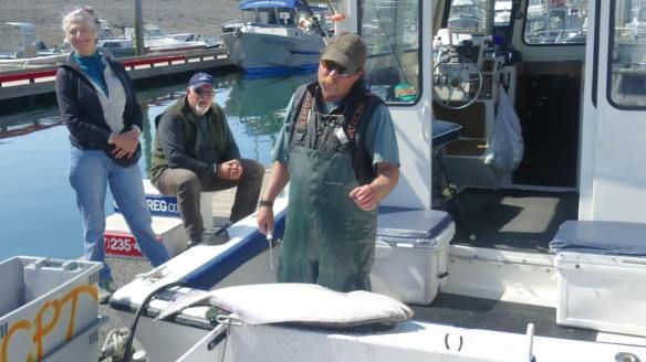 Captain Daniel preparing to clean halibut