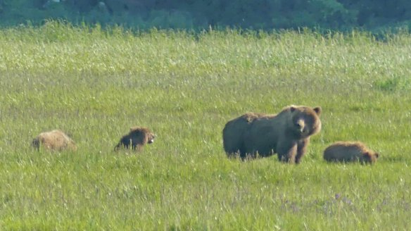 Wilderness-Bear-Viewing-and-Flightseeing-Tour -in-Alaska-National-Park