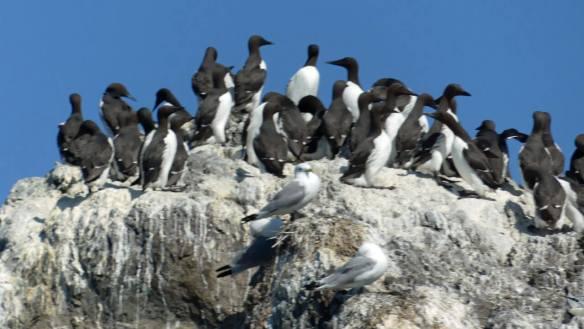 nesting-rainbow-tours-wildlife-seldovia-tour-bucket-list-10-day-self-guided-alaska-kenai-peninsula-Itinerary