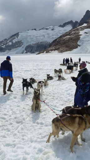 Alaska Dog Sled Encounter - Sled dog team takes a short break during a summer-time dog mushing encounter