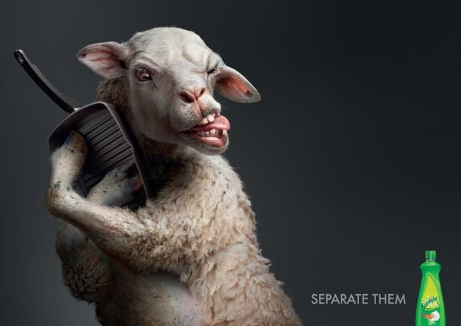 Sunlight-sheep-print-advertisement