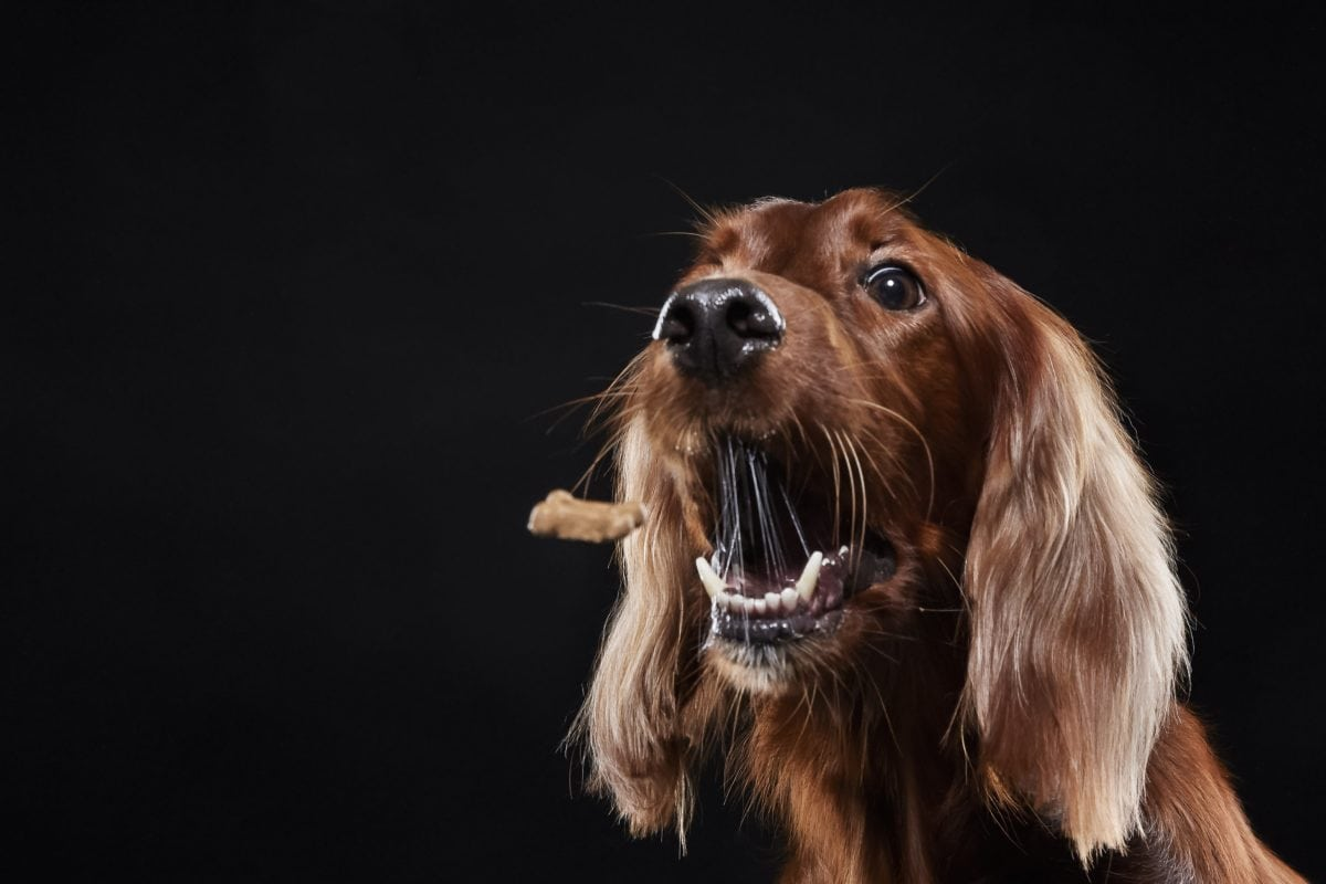 list of examples of classical conditioning in everyday life