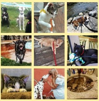 collage of cats and dogs by alison blackman for advicesisters.com