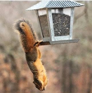 for advicesisters beauty product story squirrel upside dowm on bird feeder