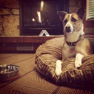 Tabitha Dog bed