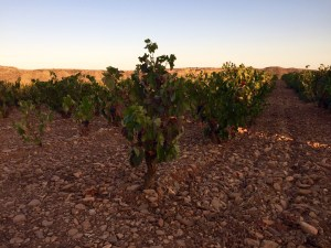 Valpiedra winery