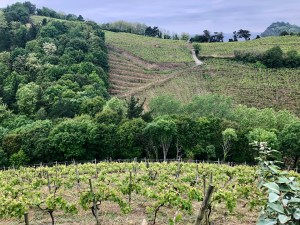 Basque wine country