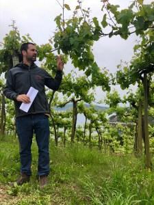 Basque wine country txakoli