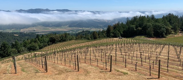 Napa Valley Cabernet: The Distinct Difference between Mountain and Valley Floor Fruit