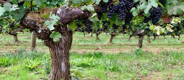 Résonance Winery: The Essence of Class