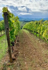 Oregon Willamette Valley wine country