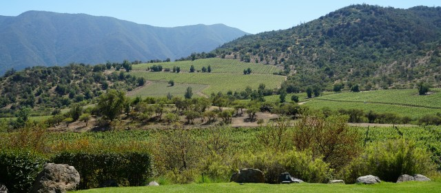 Altair Winery: A Chilean Star