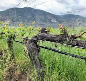 okanagan wine bc