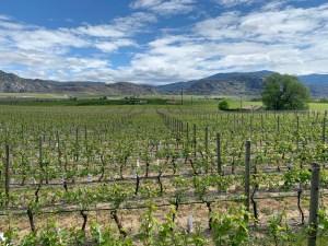Oliver BC okanagan valley wine