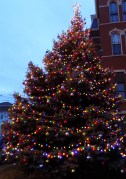 This year's Christmas tree was donated by Peabody resident Jonathan Whittier and his family. Whittier had grown the tree since it was a sapling in 1988. The blue spruce now stands 35 feet tall and weighs 1,800 pounds.