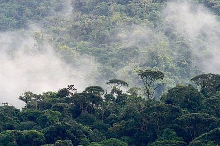 Las Nubes Forest Reserve in the Alexander Skutch Biological Corridor