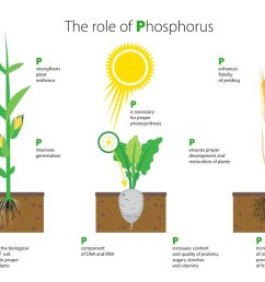 top 28 what does phosphorus do for plants how do i phosphorus cycle explained calcium nutrient cycle [ 1200 x 900 Pixel ]