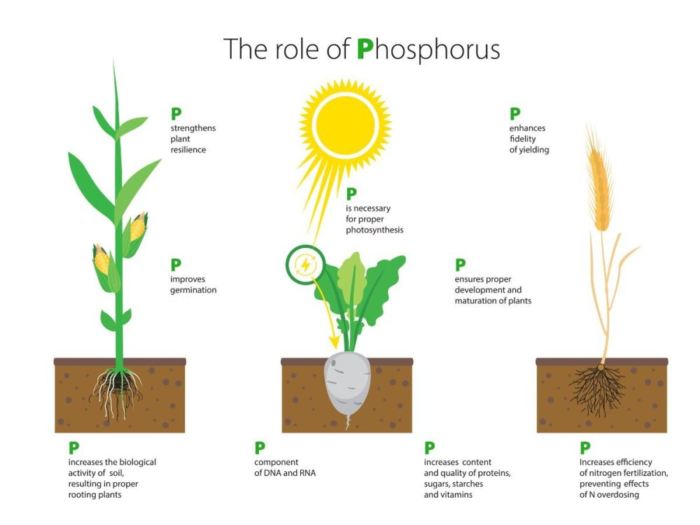 medium resolution of top 28 what does phosphorus do for plants how do i phosphorus cycle explained calcium nutrient cycle