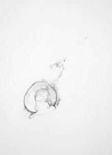 acetabulum varia (detail)