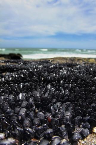 NZ-muriwai-beach