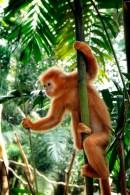 singapore zoo monkey