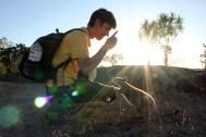 Australian Wallabies