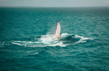 Hervey Bay Whale Watching, Australia