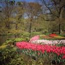 keukenhof-holland-tulips21