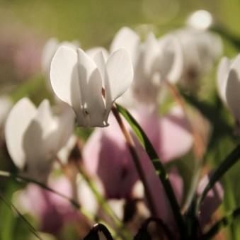 spring-maisons-laffitte-2