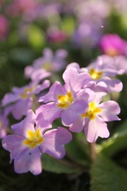 spring-maisons-laffitte-6