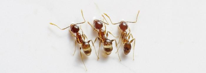 ants00