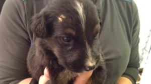 Cute puppy being held.