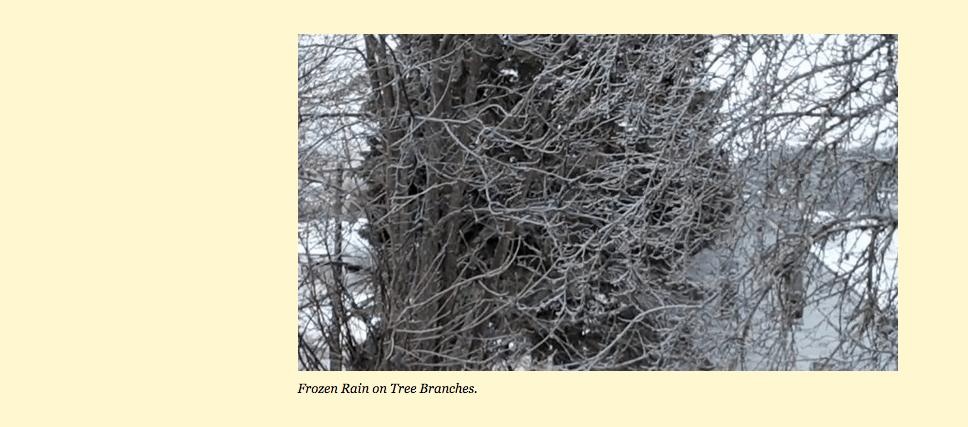 """Freezing Rain On Tree Banches"""