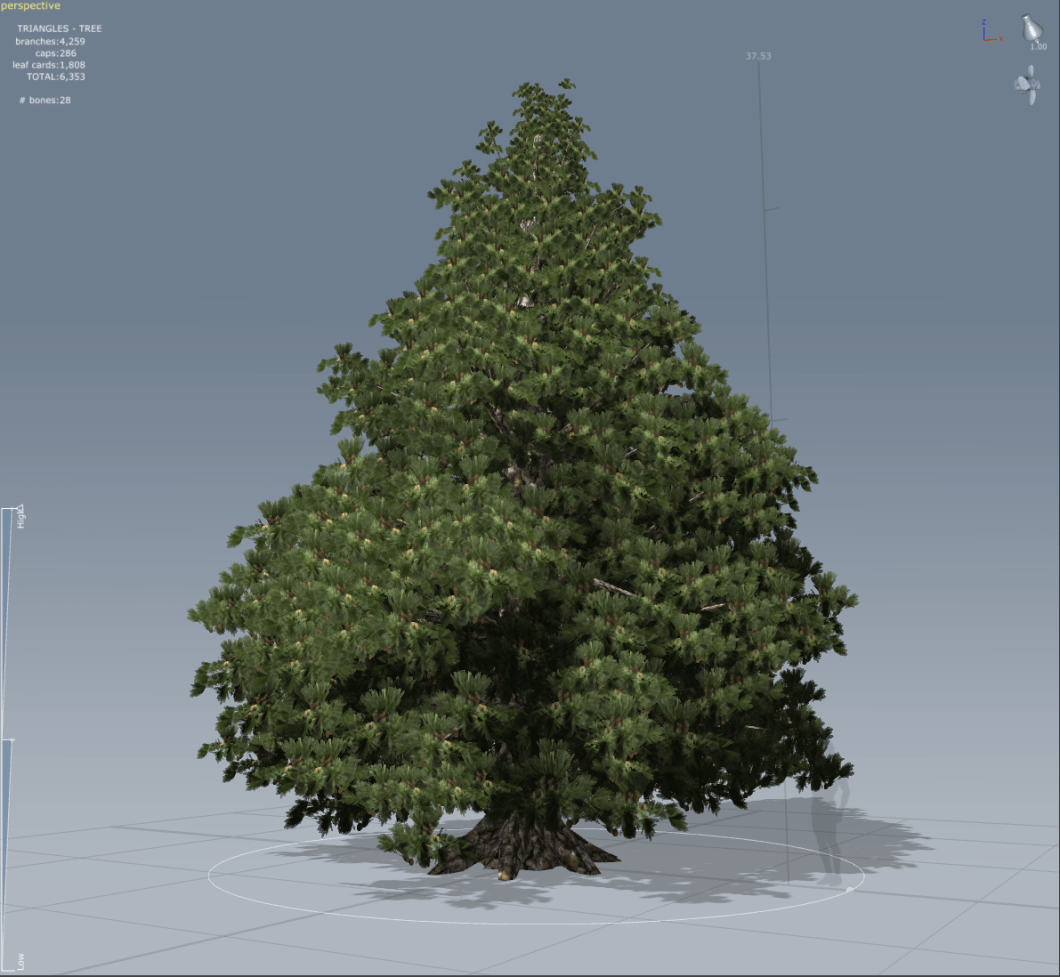 """- """"Tall Spruce with roots -"""" -"""