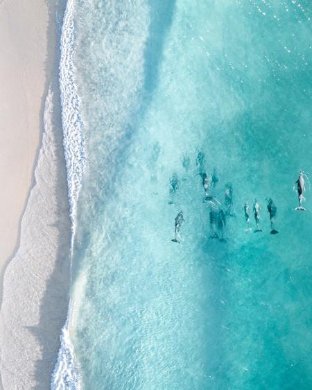 Dolphin Aerial Photograph