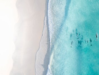Aerial Drone Photo of Dolphins Swimming
